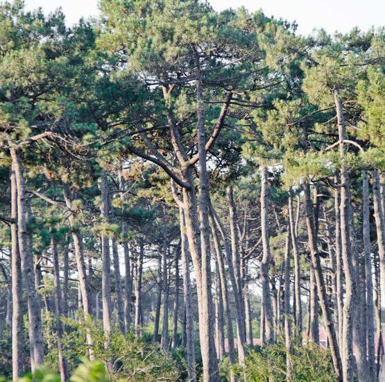 Camping forêt Landes